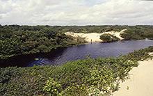 Algodoal - Pará